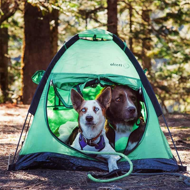 dog travel items