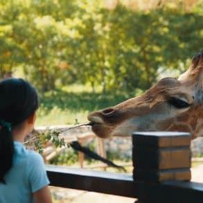 Best Zoos in the US