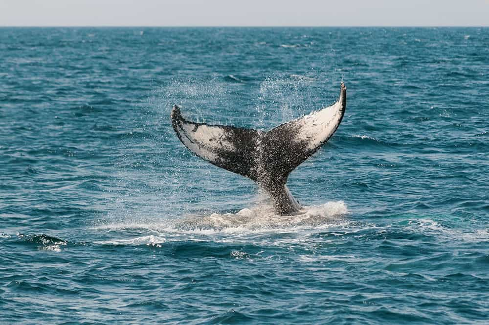 Monterey Bay Aquarium Whale