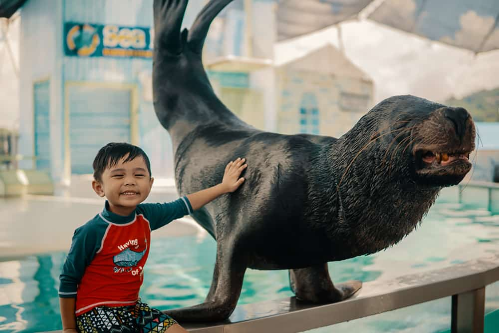 Ocean Adventure Subic Bay swimming with sea lion