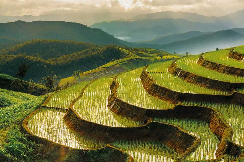 Terraced Rice Field in Chiangmai