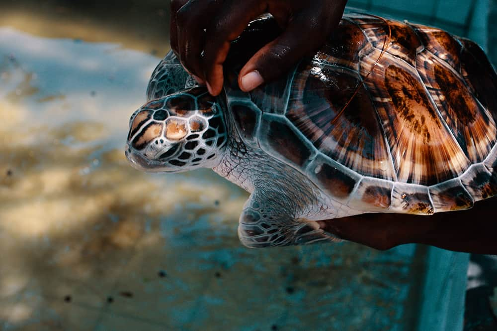 Zanzibar Mnarani Marine Turtle Conservation Center